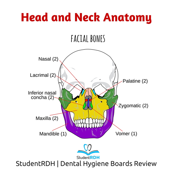 Q: Which of the following is a facial bone?
