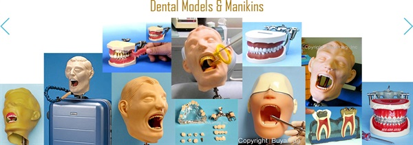 HYGIENE MODELS AND PERIODONTAL MODEL AT BUYAMAG INC ARE IMPORTANT EDUCATION RESOURCES FOR DENTISTRY EDUCATION SCHOOLS PROGRAM