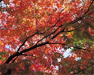 Tip from Consultant Sandy Pardue: Fall Use it or Lose it Letter